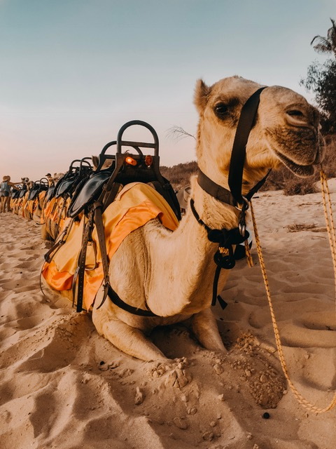 Camel Ride in Broome, Western Australia